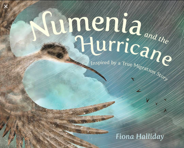 "Cover image ""Numenia and The Hurricane"""